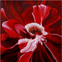 Fourth of July Rose, a Painting by American Nature Painter, Judith A. Maddox Saylor.