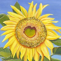 Mammoth Russian Sunflower, a painting by American Nature Painter, Judith A. Maddox Saylor, from the Sunflower Series at JAMS Artworks.